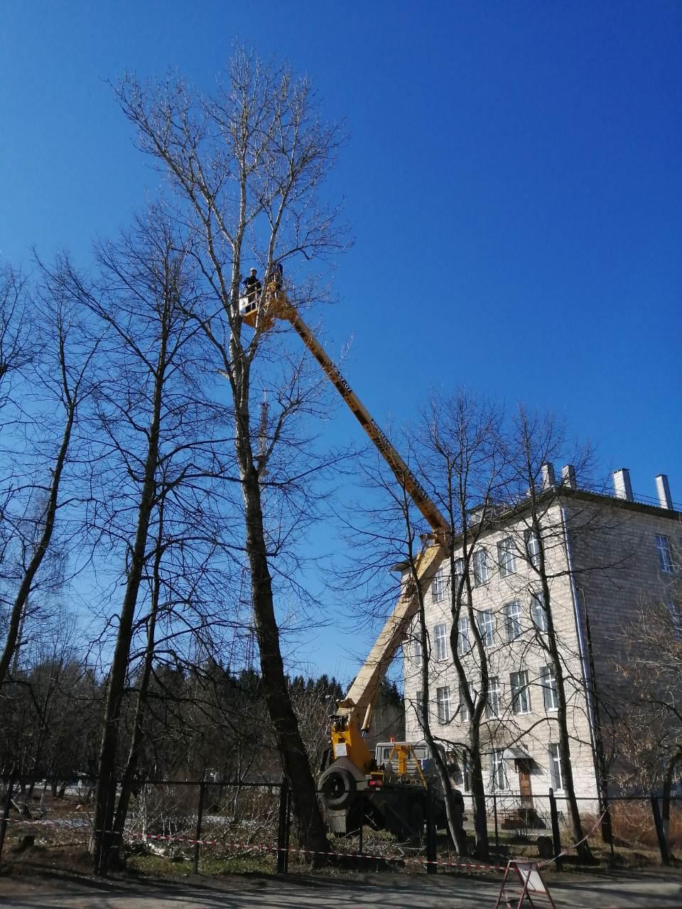 Удаление и кронирование деревьев
